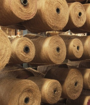 govt considers tk 50b special fund to support jute millers