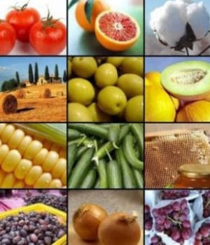 Export of agro-products rises 53pc in nine months   RMG