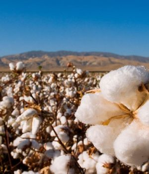 Indonesian textile manufacturers will tour US Cotton Belt | RMG